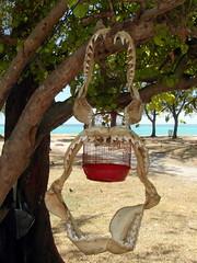 mauritius jaws