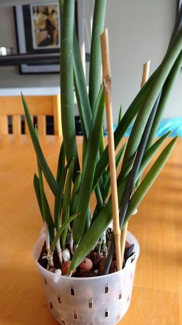 Orchidées chez lavandula 37902940215_da763a0f06_z