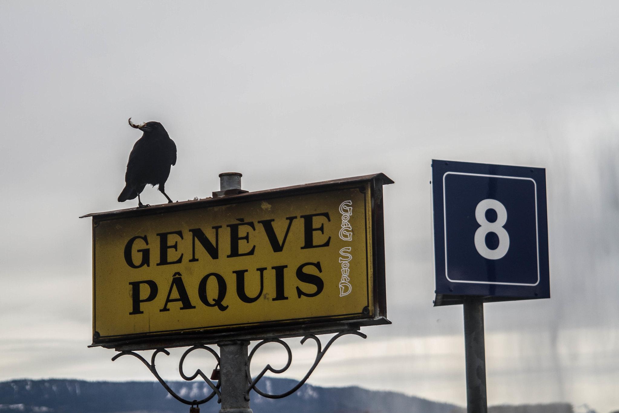 Geneve/Swiss03