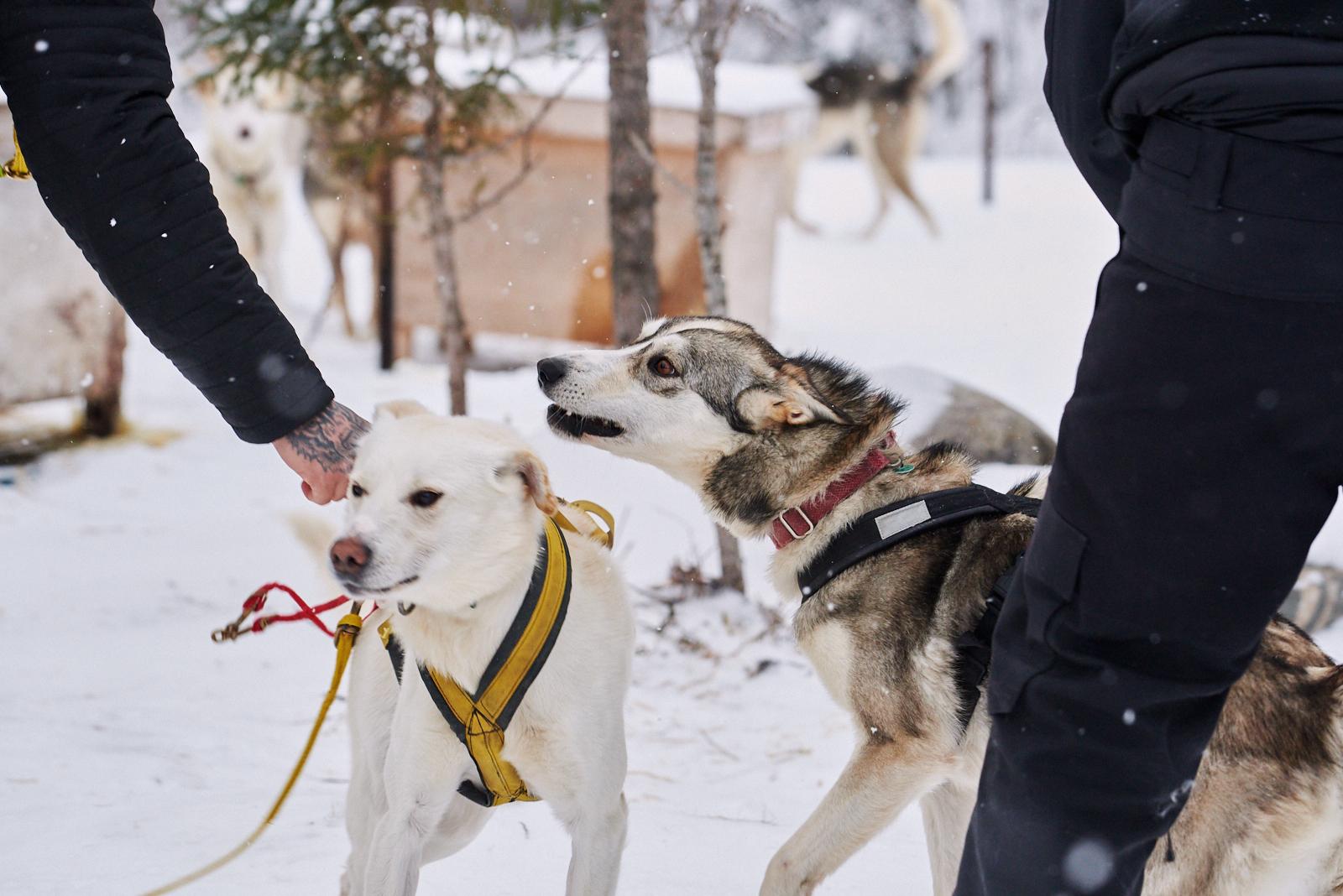 Dog Day (image heavy)