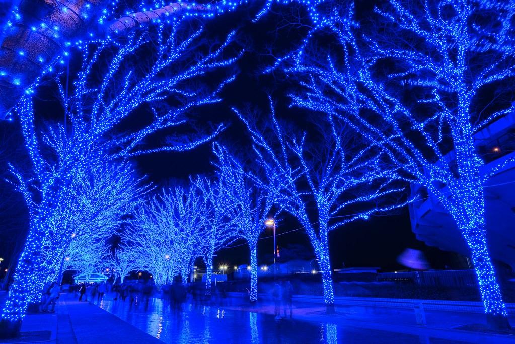 Shibuya Christmas Illumination 渋谷公園通り