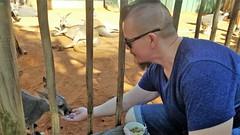Chad Feeding Kangroos