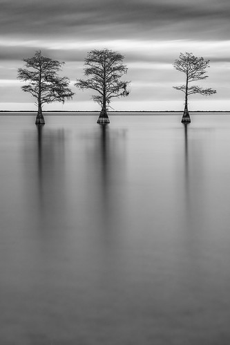 2017 sonyilce7rm2a7rii canonef135mmf2lusm gitzogt2830basaltseries2 bh55 ba72l rrspcl01 filters formatthitechfirecrest4stopnd leebigstopper leefoundationkit blackwhite landscapephotography longexposure monochrome nikcollectionbygoogle trees cypresstree copyright2017 water southcarolina lakemoultrie