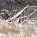 Great Gray Owl-44866.jpg