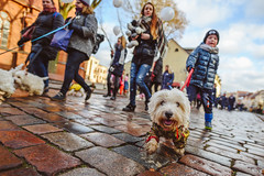 Dog Parade | Kaunas, Lithuania