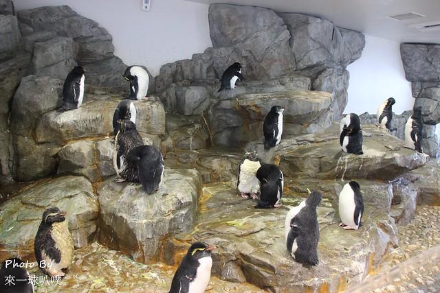 海遊館035
