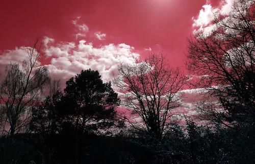 ciel sky clouds cloud nuages nuage color couleur yahoo google flickr trees tree arbres arbre françoistomasi tomasiphotography light lumière indreetloire touraine lanouvellerépublique photo photography photographie photoshop france europe digital numérique pointdevue pointofview pov traitementdimage filtre campagne nature bois jardin garden sun soleil sunset sunrise décembre 2017