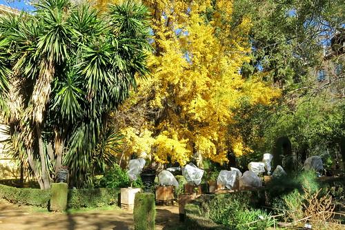Los espiritus del Botanico