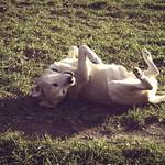2015-02-26 um 15-45-17 - Hund auf dem Rücken