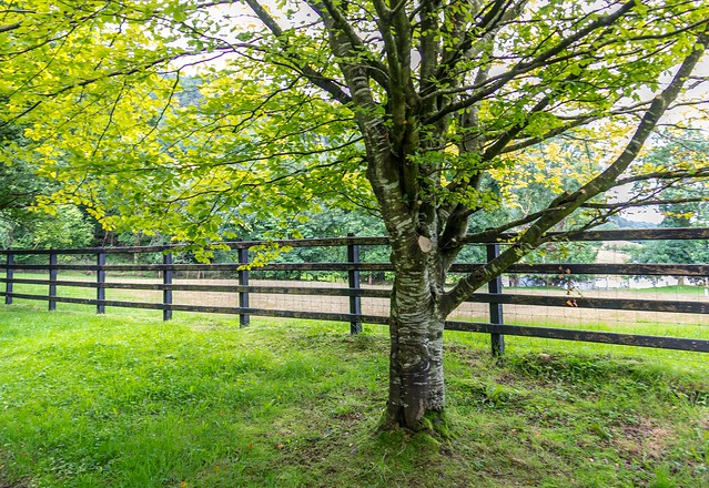 Ireland - Glencar