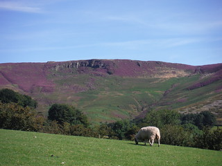 Upper Tor, Nether Tor, Golden Clough