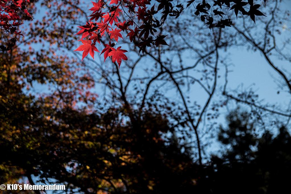 IMG_2078東郷公園