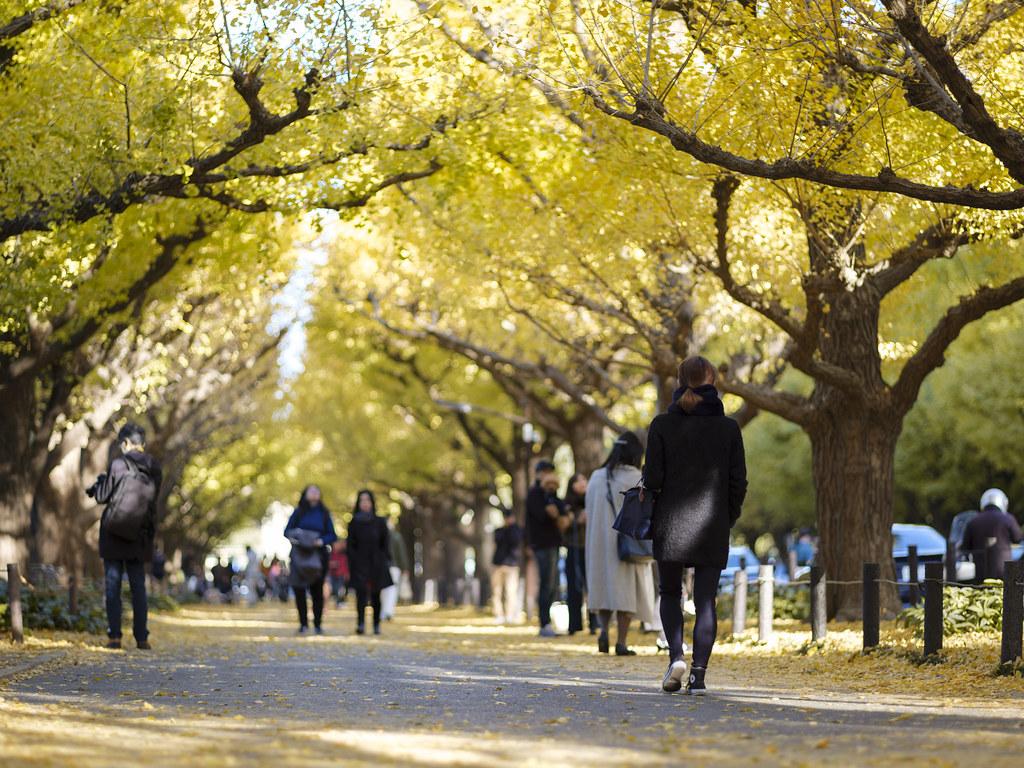 神宮外苑銀杏並木⑥