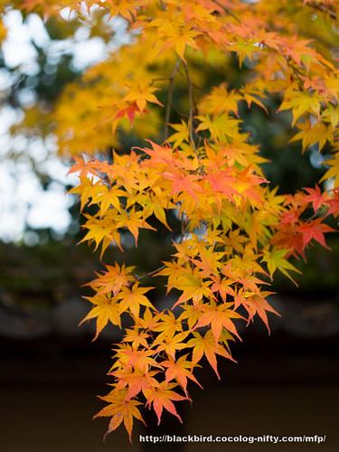 Autumn lreaves 20171123 #02