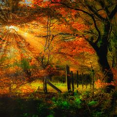 Thornley Woods