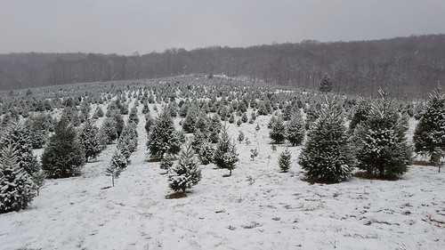 Snickers Gap Christmas Tree Farm