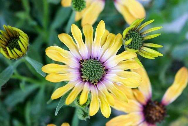Temps de flors_0093