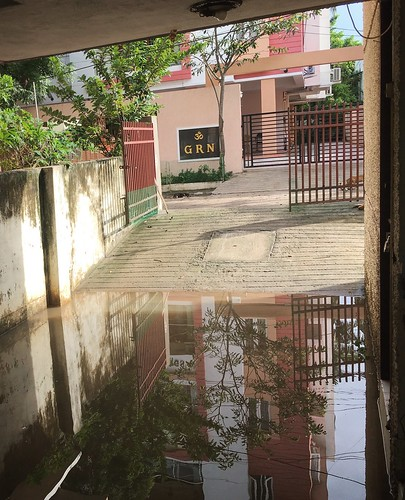 Reflection in rainwater
