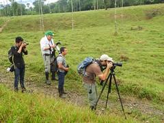 Birding in Mutata, Colombia