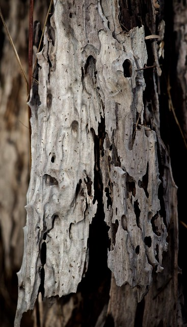 woody bits
