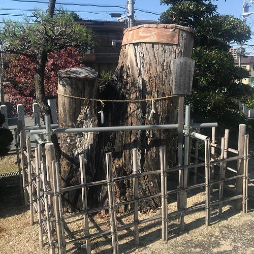 成海神社のご神木