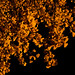 Autumn magic in dark ~ 321/365 2017