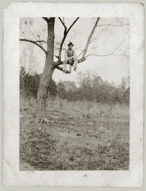 Man in a tree