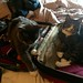 Kitties in my suitcase