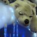Polar Bear   PB270866sm