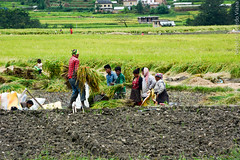 Village of Balthali, Nepal.