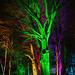 Dunham Christmas Illuminations - the winter garden