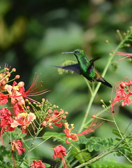 Tobago Flora and Fauna (Nov 2017)