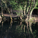 IW: River Itchen