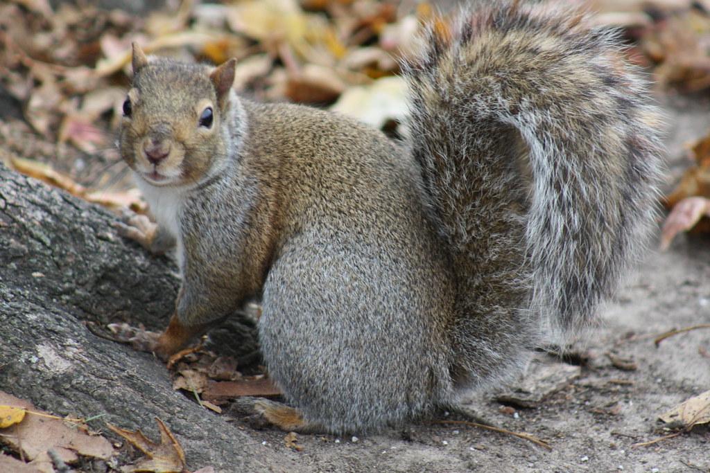Squirrel Invasion 14