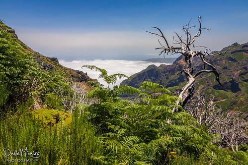 Beautiful Madeira by Daniel Mihai