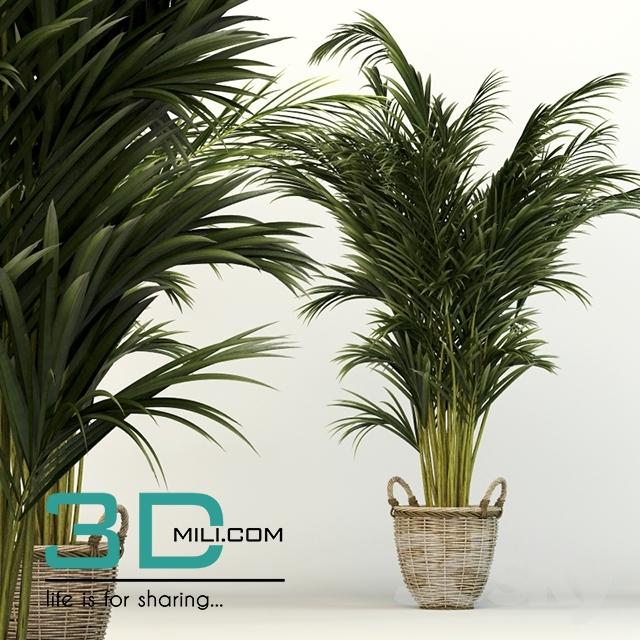 163  Plant 163 3dsmax Model Free Download - 3D Mili
