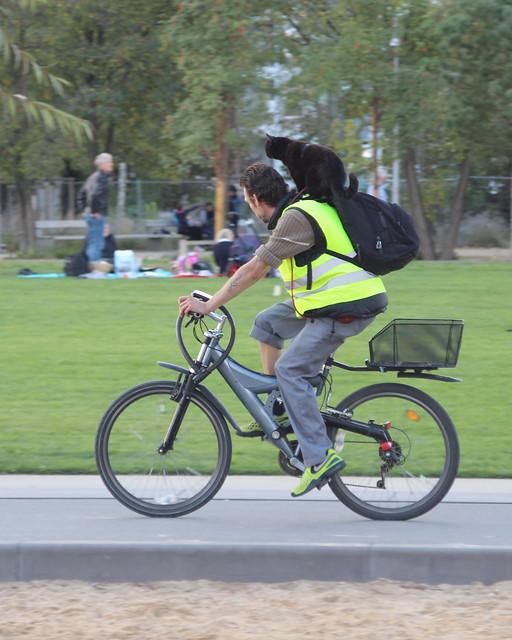 Radfahrer mit Katze im Gleisdreieckpark