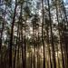 Im Wald 01
