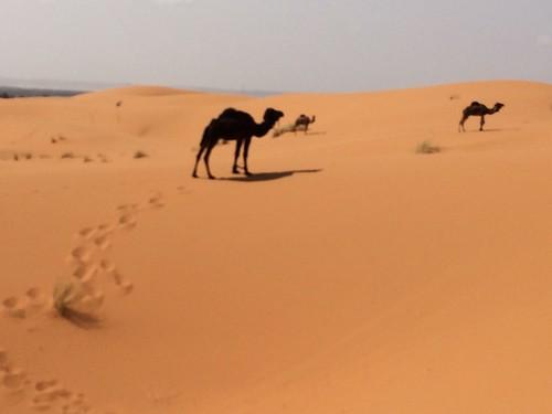 阿部工房の「砂」の世界観
