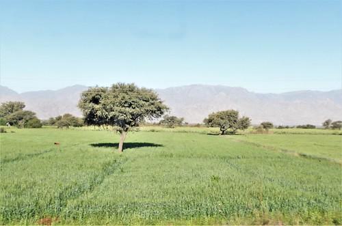 i-Mount Abu-udaipur (13)