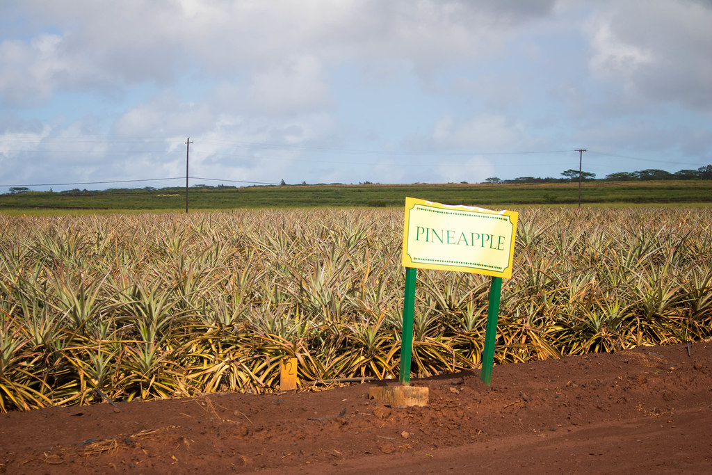 Dole Plantation Pineapple Express Train Tour