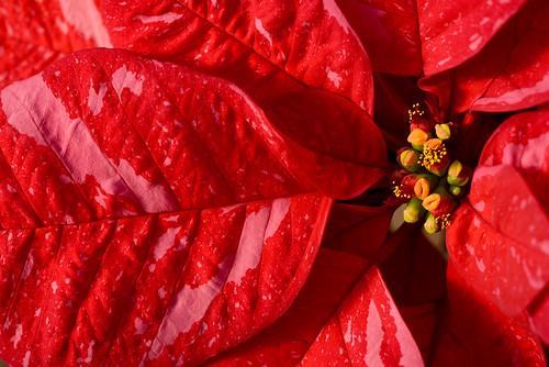Premier Jingle Bells