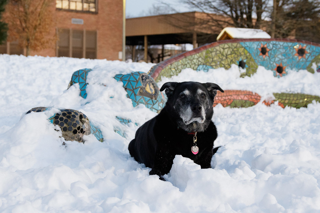 Our dog Ellie sits beside the dragon statue at Irvington School after a heavy snowfall