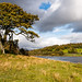 Oak tree by the lake shore