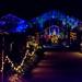 Christmas Glow RHS Wisley 02 December 2017 (34)