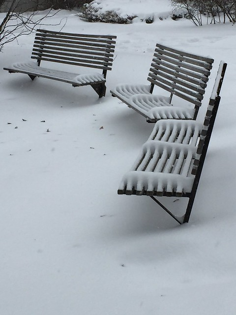 Snow on the Benches