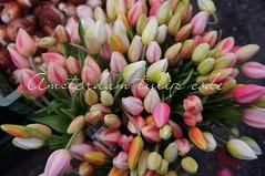 Zip tulip