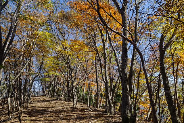 妻坂峠への稜線・・・なんとも心地よい