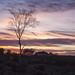 Burley Sunset