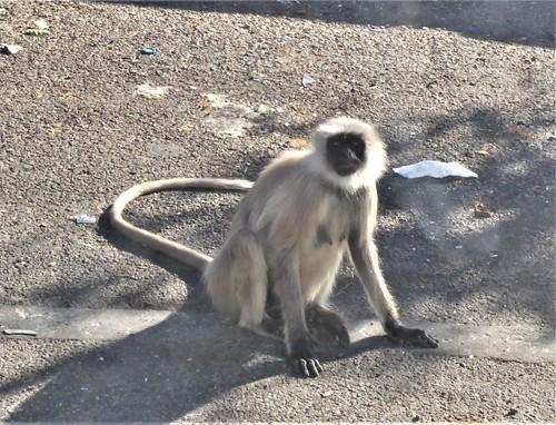 i-Mount Abu-udaipur (7)
